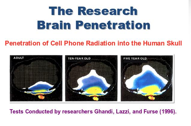 Brain Penetration - Penetration of Cell Phone Radiation into the Human Skull