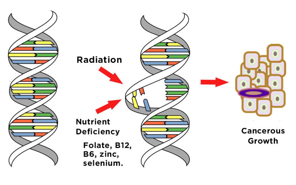 Ozáření DNA vede k Nutričním Nedostatkům a k Rakovině