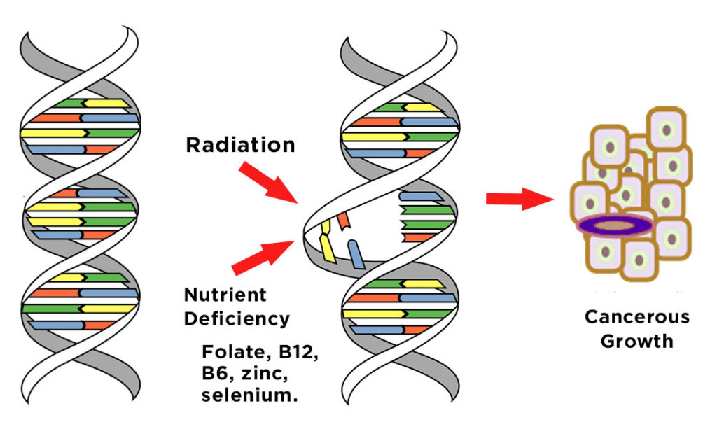 Radiation - Nutrient Deficiency - Cancer