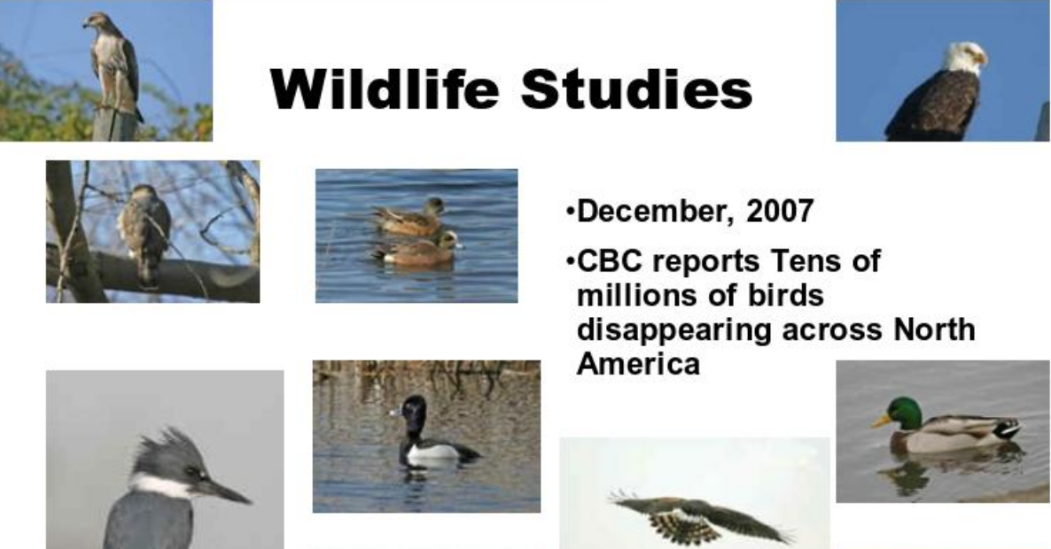 Wildlife Studies - CBC Reports Tens of Millions of Birds Disappearing across North America