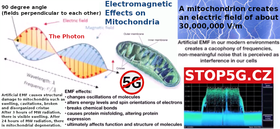 Electromagnetic Effects on Mitochondria