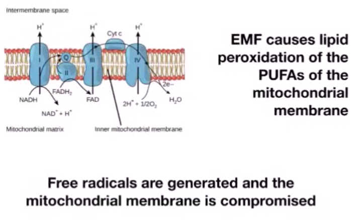 Electromagnetic effects on mitochondria - Free radicals