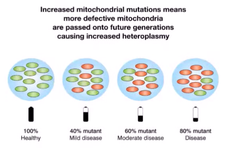 Electromagnetic effects on mitochondria - Increased mitochondrial mutations